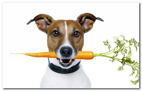 Image Diet Raw Foodism Raw Feeding Dog Like Mammal Italian Greyhound