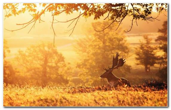 Image Digital Art Morning Grass Deer Field