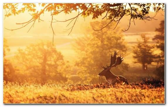 Image digital art morning grass deer field