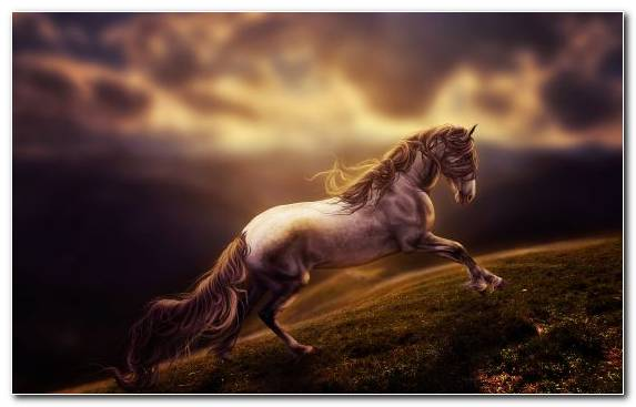 Image Digital Art Painting Horse Mustang Horse Horses