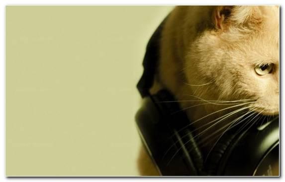 Image Disc Jockey Snout Ecouteur Fauna Wildlife