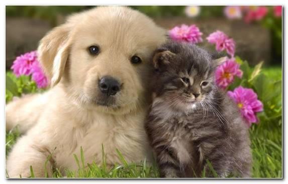 Image dog breed dog breed group dog like mammal puppy hunting dog