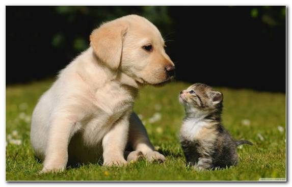 Image Dog Breed Dog Breed Group Hunting Dog Kitten Dog
