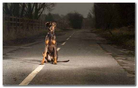 Image Dog Breed Dog Crossbreeds Snout