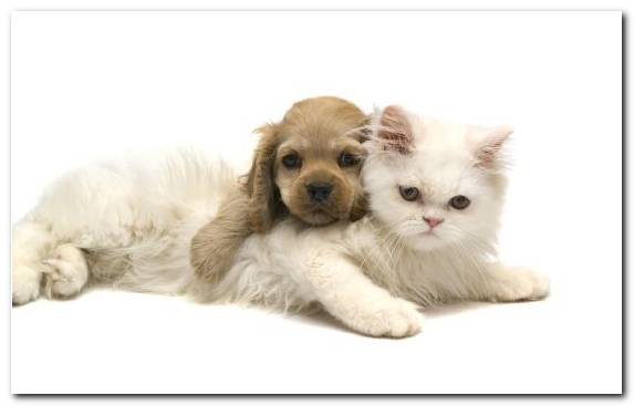 Image Dog Breed Golden Retriever Dogcat Relationship Puppy Animal