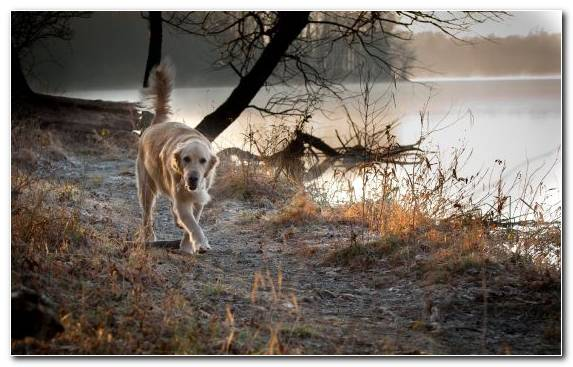 Image Dog Breed Golden Retriever Tree Wildlife Sunlight