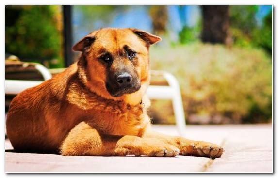 Image Dog Breed Group Dog Breed Street Dog Dog Puppy