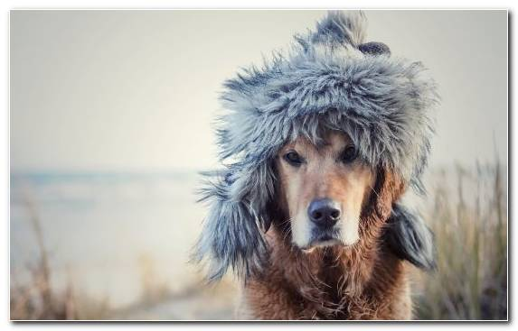 Image Dog Breed Group Fur Hunting Dog Dog Park Winter