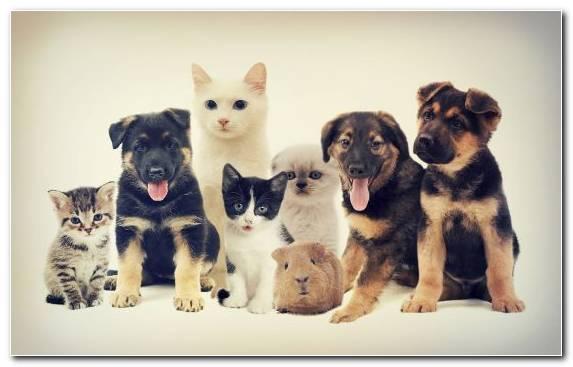 Image dog breed group small to medium sized cats pet dog cat