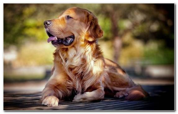 Image Dog Breed Puppy Snout Sporting Group American Kennel Club