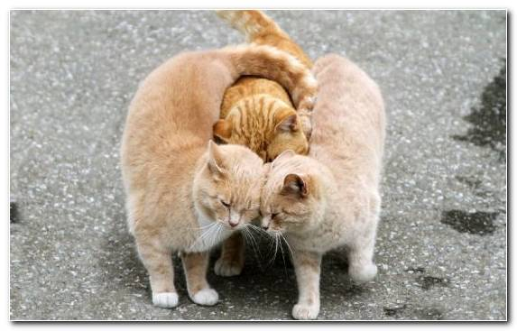 Image Dog Cat Popular Cat Names Kitten Mouse