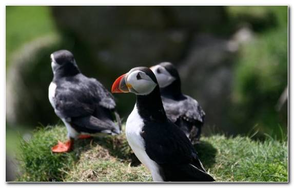 Image Dog Dog Like Mammal Charadriiformes Puffin Bird