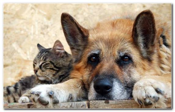 Image Dog Fur Wildcat Dogcat Relationship Animal Shelter
