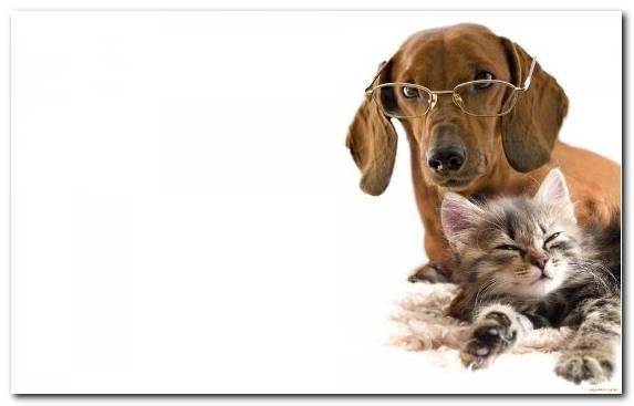 Image Dog Grooming Dogcat Relationship Snout Animal Kitten