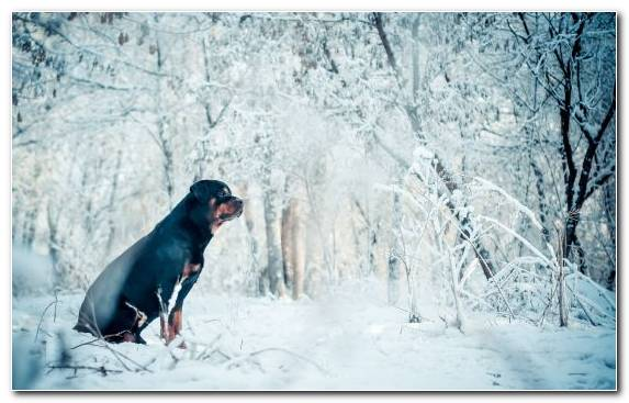 Image Dog Like Mammal Dog Ice Snow Adventure