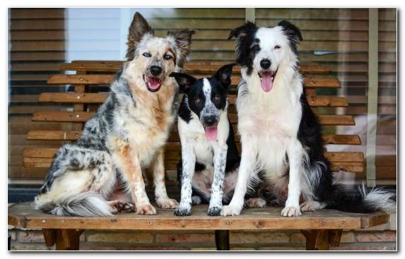 Image Dog Like Mammal Friendship Breed Rare Breed Dog Dog