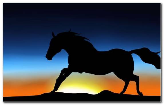 Image Dog Like Mammal Horses Horse Mustang Horse Stallion