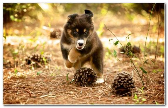 Image Dog Like Mammal Snout Animal Pomeranian Cuteness