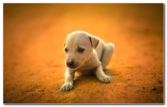 Image Dog Whiskers Cuteness Dog Breed Puppy