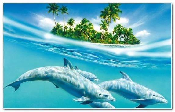Image Dolphin Marine Biology Water Marine Mammal Ecosystem