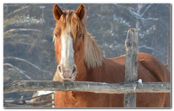 Image Donkey Snout Wolf Mustang Horse Horses