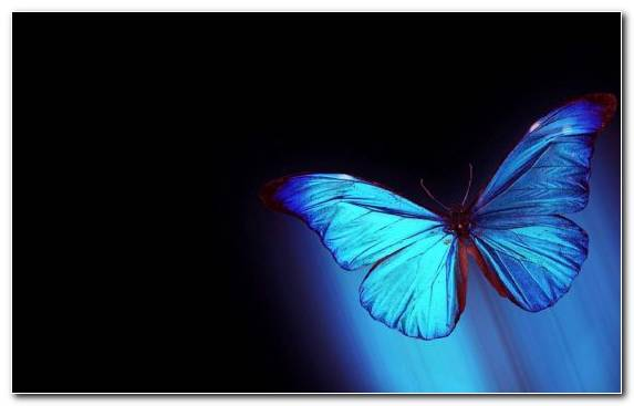 Image Drawing Butterfly Insect Pollinator Blue
