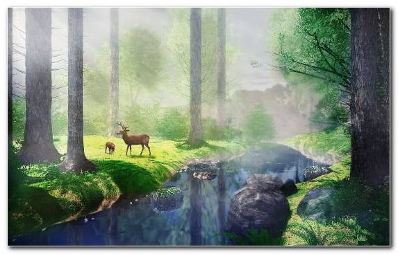 Image Drawing Tree Watercourse Old Growth Forest Painting