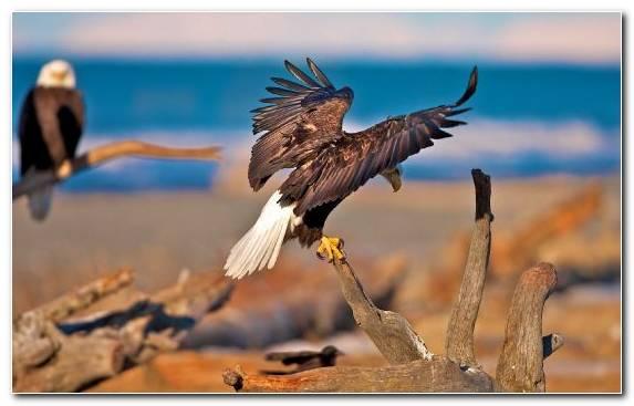 Image Eagle Owl Wildlife Accipitriformes Oryol