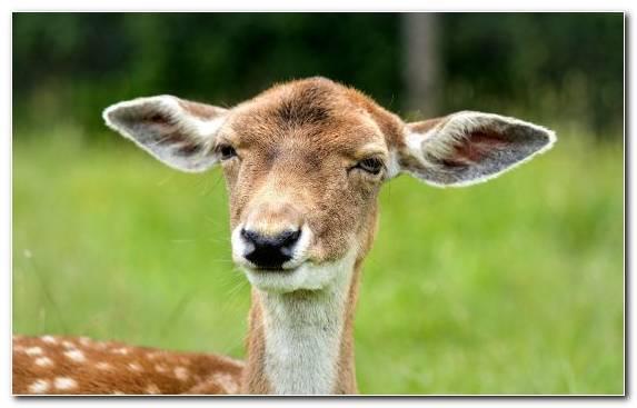 Image Earring Grasses Antelope Deer Paper