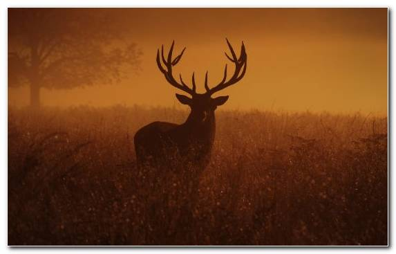 Image Ecoregion Elk Deer Morning Grasses