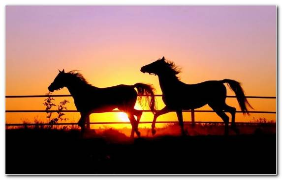 Image Ecoregion Mustang Horse Horse Breed Stallion Rearing