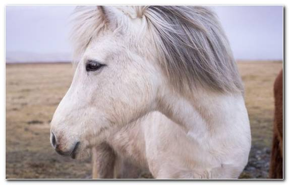 Image Ecoregion New York City Horse Wildlife Pony