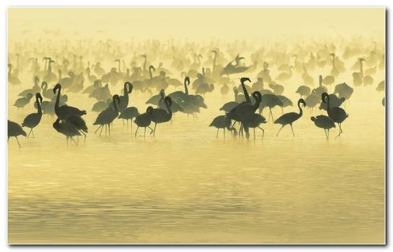 Image Ecosystem Beak Wildlife Ecoregion Flamingo