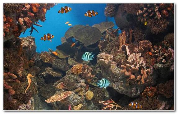 Image Ecosystem Fish Fish Live Paper Coral