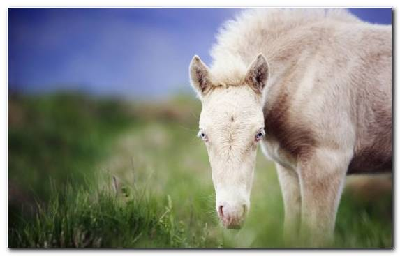 Image Ecosystem Foal Mustang Snout Pasture
