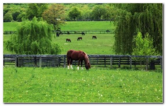 Image Ecosystem Grassland Pasture Field Arabian Horse