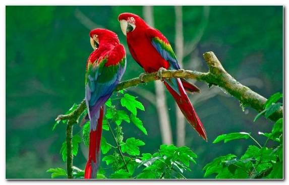 Image Ecosystem Lorikeet Scarlet Macaw Beak Macaw