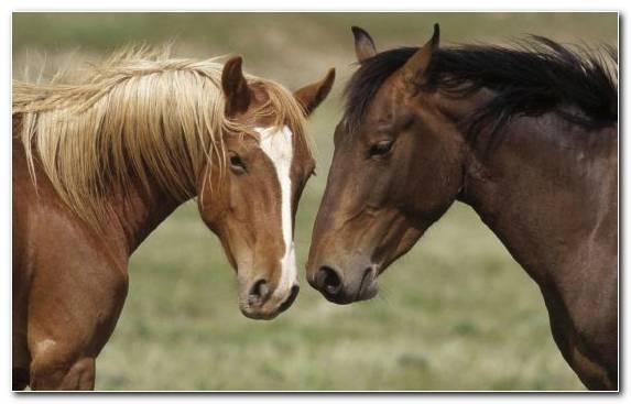 Image ecosystem mane pasture grazing foal