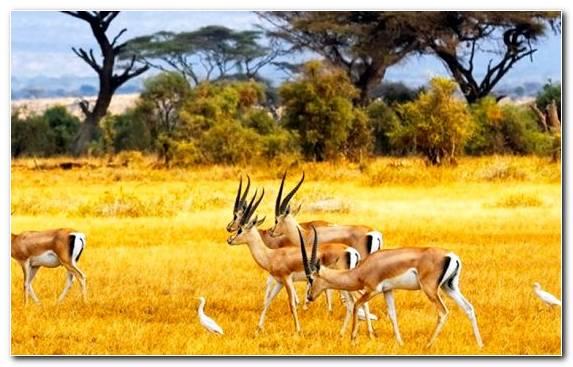 Image Ecosystem Nature Reserve Savanna Herd Grassland