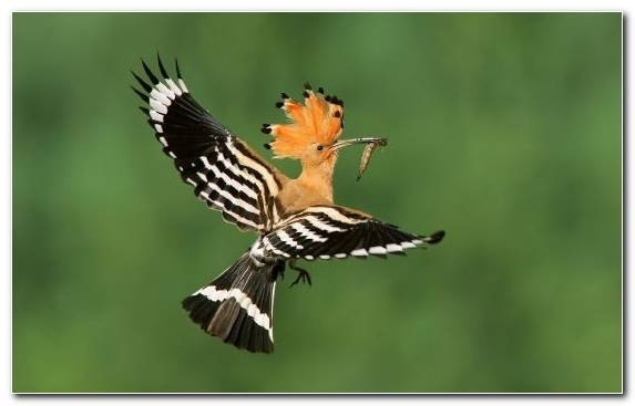 Image Ecosystem Pierrot Beak Piciformes Wildlife