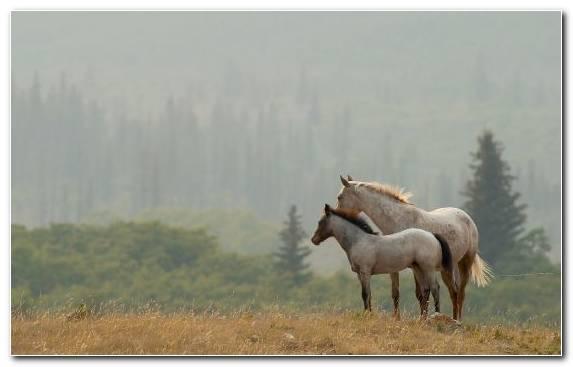 Image Ecosystem Pony Pasture Grassland Horse