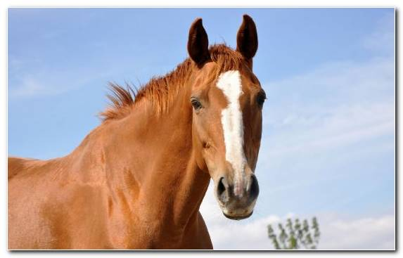 Image ecosystem stallion grazing horses pony