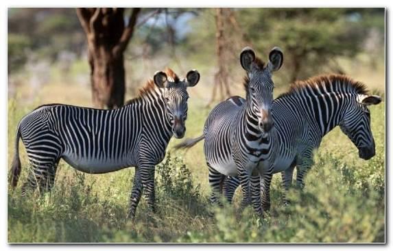 Image Ecosystem Terrestrial Animal Grassland Wildlife Desert