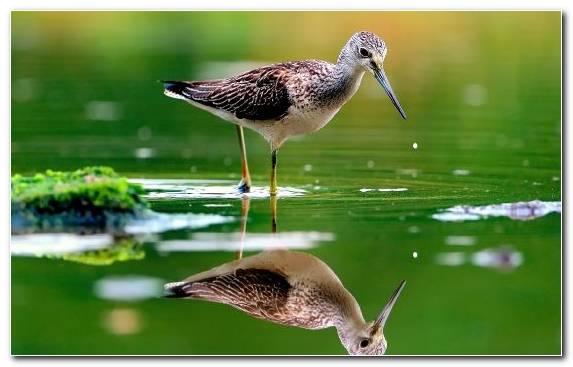 Image Ecosystem Wildlife Beak Kingfisher Water Bird