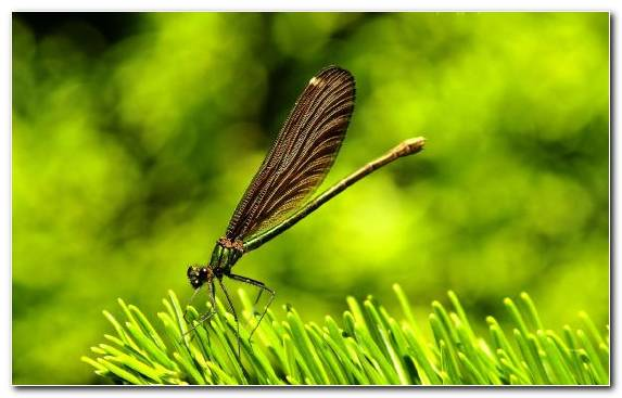 Image Ecosystem Wildlife Damselfly Macro Photography Invertebrates
