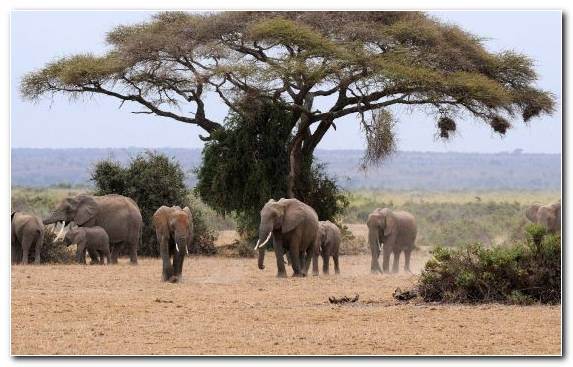 Image Elephant Nature Reserve Lion Animal Herd