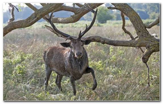 Image Elk National Park Wildlife Nature Reserve Reindeer