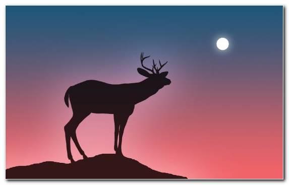 Image Elk Silhouette Harvest Moon Wildlife Reindeer