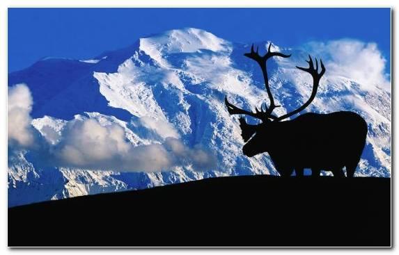Image Elk Tundra Mountain Range Denali Sky