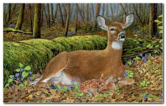 Image Embroidery Wildlife Canvas Terrestrial Animal Nature Reserve